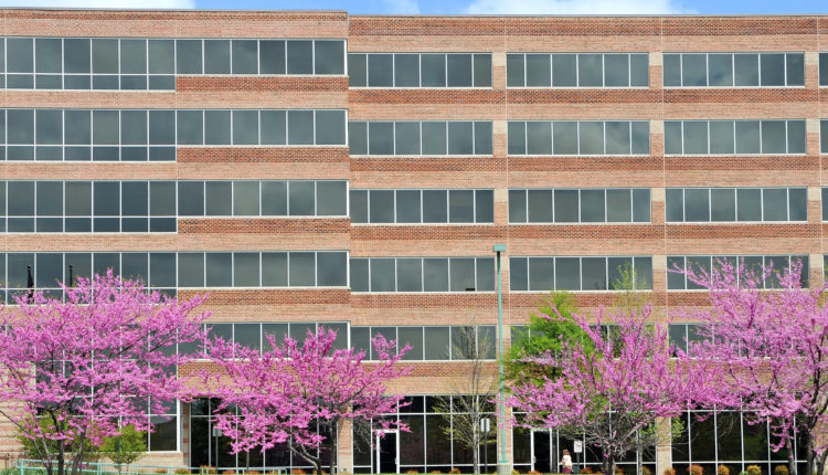 Office building with blossom trees