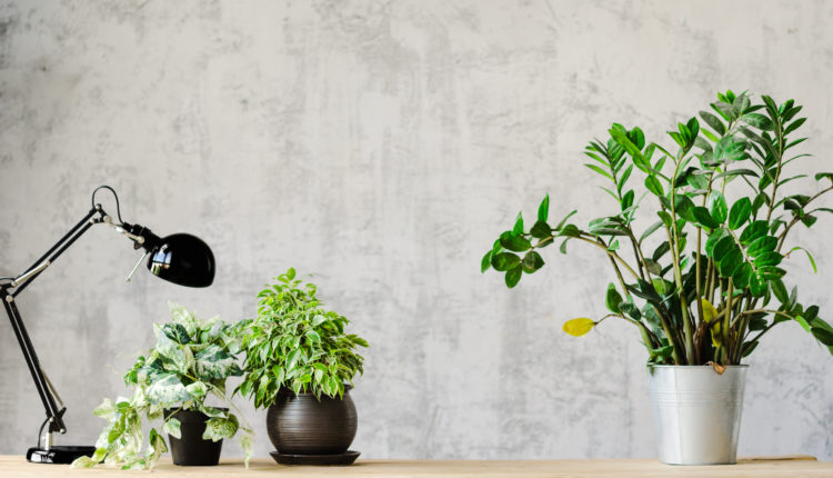 Plants on a desk, next to a lamp